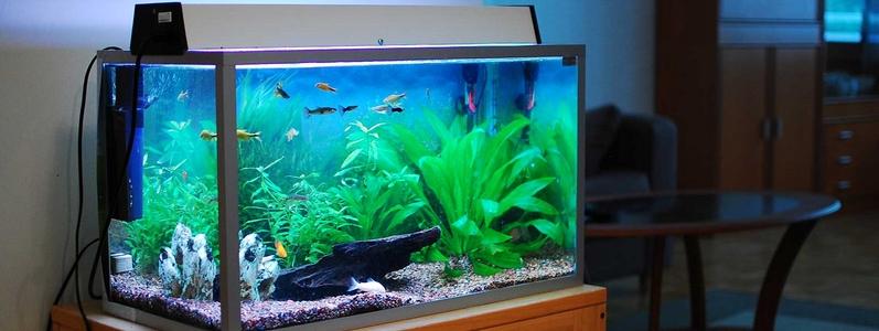 aquarium lampen led t5